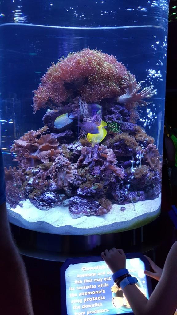 Disney_Dory_Aquarium